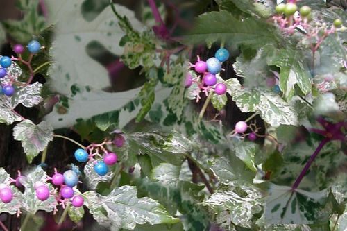 Porcelain Berry Vine