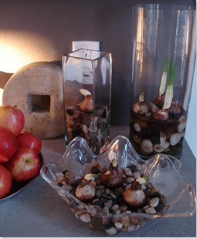 Paperwhites-bulbs-in-glass_thumb